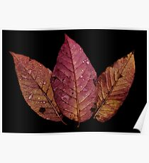 Pink and Orange Leaves  Poster