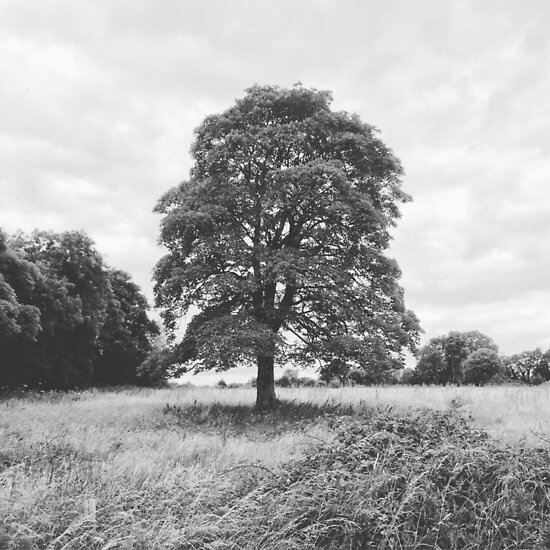 Countryside Tree by nordicillusion