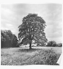 Countryside Tree Poster
