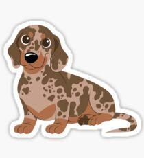 Miniature Dachshund - Dapple Sticker