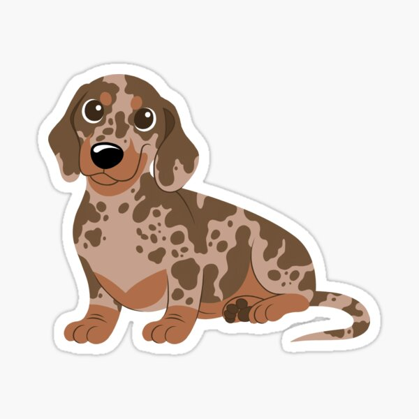 Miniature Dachshund - Dapple Sticker
