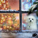 Waiting for Santa ! by Morag Bates