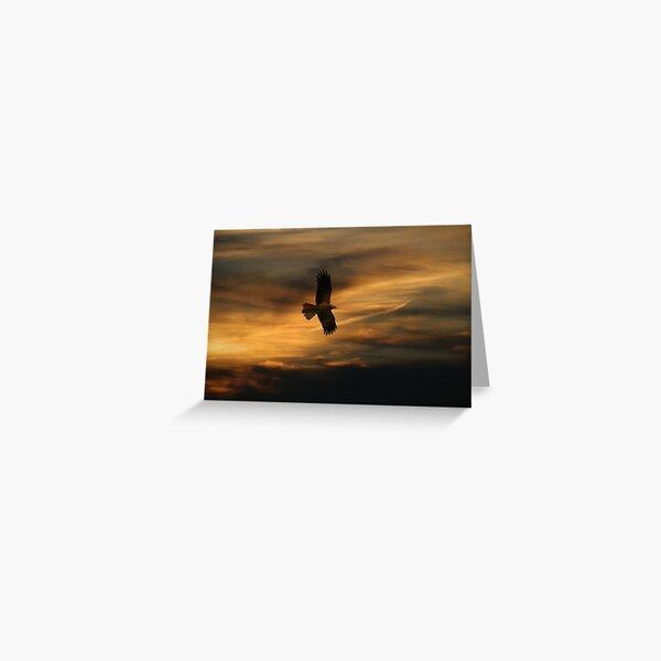 Swamp Harrier. Greeting Card