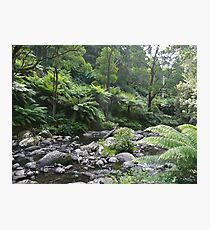Primeval Forest Photographic Print