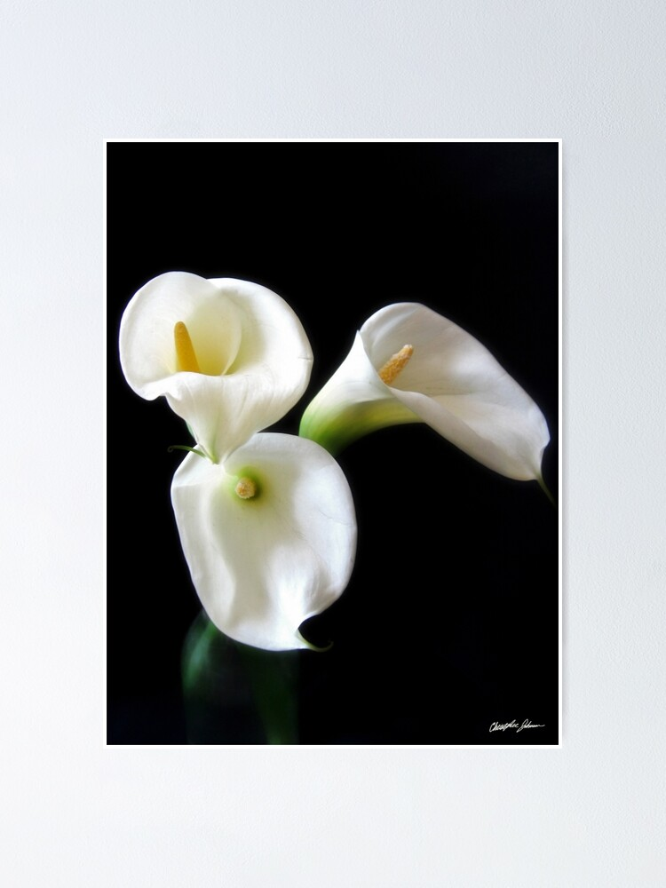 Elegant Calla Lily Flowers 6 Poster By Travelphotoart Redbubble