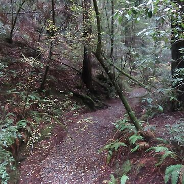 Dry Creek, Redwood Forest by Starwake