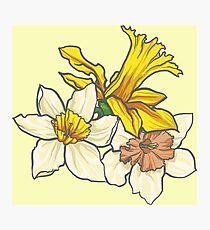 Daffodil - March Birth Flower Photographic Print