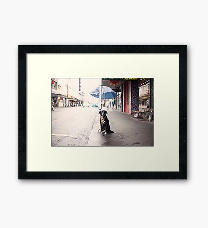 The Dog Framed Print