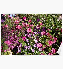 Colorful pink, white, purple garden flowers. Floral nature photography. Poster