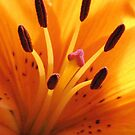 Day Lilies Make The Day by AngieDavies