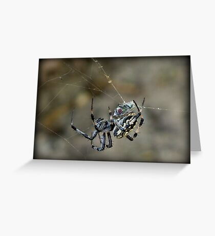 ...said the Spider to the Fly Greeting Card