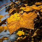 Autumn Leaves by Dave Hare