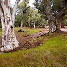 Dry Creek, Wilpena, South Australia. (Study # 1) by johnrf