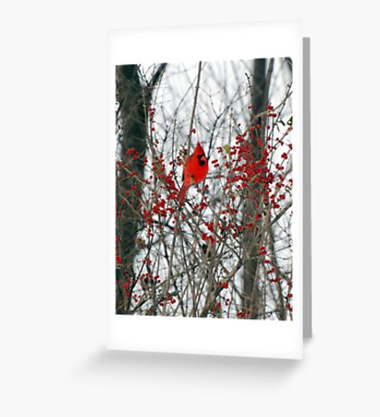 Cardinal  Greeting Card