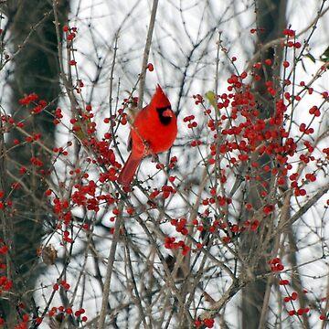 Cardinal  by vmurfin