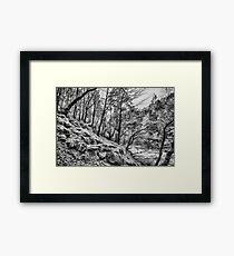 Forest Valley Framed Print