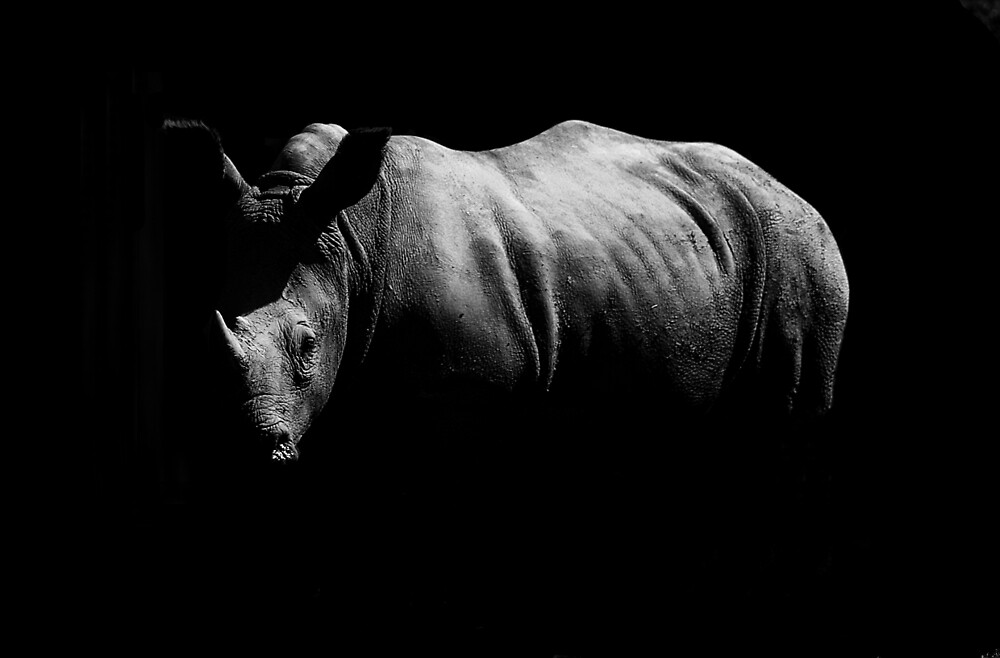Black and White Rhino by dfgumby