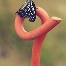 Black Butterfly with White and Orange Markings on Metal Pole by Beverly Claire Kaiya