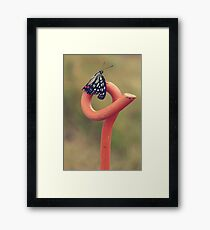 Black Butterfly with White and Orange Markings on Metal Pole Framed Print