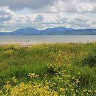 Arran from Scalpsie Bay, Bute by Fiona MacNab