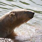Clean Bear by Ray Clarke
