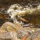 Inangahua Water by Belinda Osgood