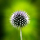 Thistle by JRMGallery