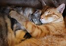 . Untitled Fizgig and Ludo by Margaret Bryant