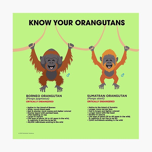 Know Your Orangutans Photographic Print