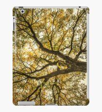 Acacia iPad Case/Skin