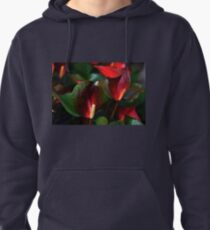 Christmas Anthurium..... Pullover Hoodie