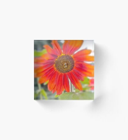 My Sunflower, go find your own Acrylic Block