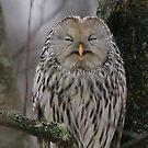 Laughing Owl by Remo Savisaar