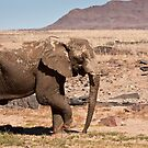Jumbo Two-step: right foot first by Owed To Nature