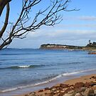 Collaroy Beach (1) by Jane Wilkinson-Franssen