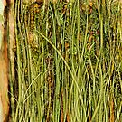 Qualia's Grass (Antique Yellow) by Russell Kightley