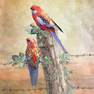 Crimson Rosella by Trudi's Images