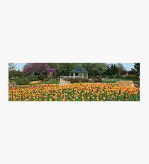 Floral Flowers Garden Photographic Print