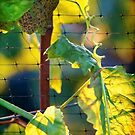 Autumn Vines by Ellen Cotton