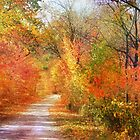 Autumn Woods by Nadya Johnson