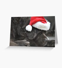 Santa Newf Napping Greeting Card