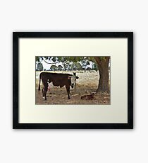 Born Yesterday. Framed Print