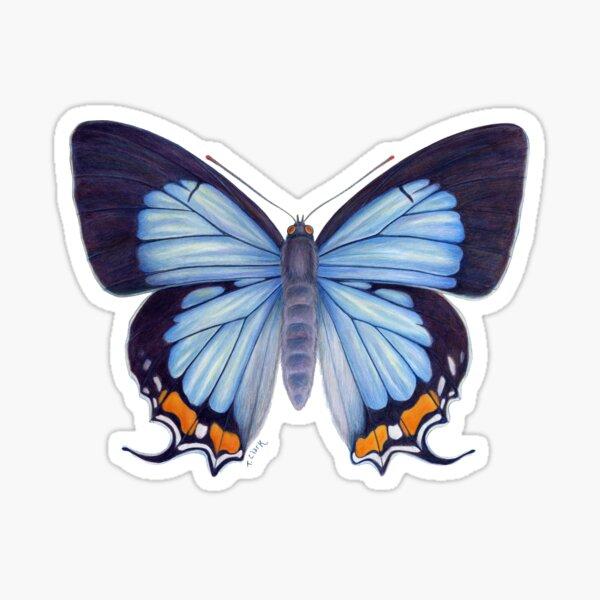 Imperial Blue Butterfly Sticker