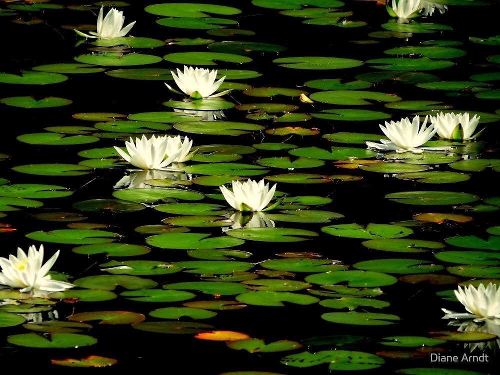 The Lily Pond...Waldport, Oregon by Diane Arndt
