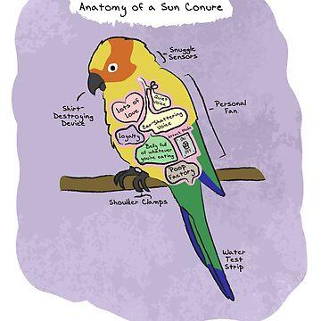 Sun Conure Anatomy by MommySketchpad