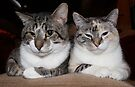 Untitled Charlie and Fizgig by Margaret Bryant
