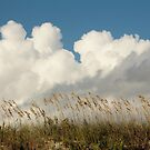 Clouds Over Beach Weeds by Cynthia48