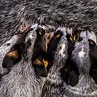 12616 4 pups by pcfyi