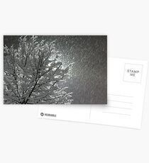 Snowy Night Lights Postcards