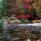 Autumn flow   by Martina Fagan